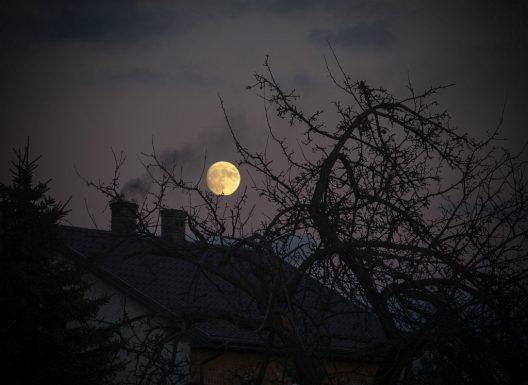 drewno księżycowe to mit